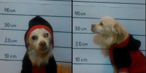 control perros